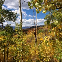 Valley of Aspens